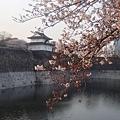 大阪城 (7).jpg