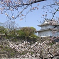大阪城 (2).jpg