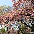 大阪城 (5).jpg