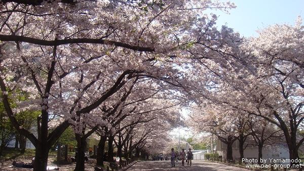 萬博記念公園 (5).jpg