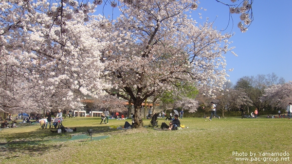 萬博記念公園 (6).jpg