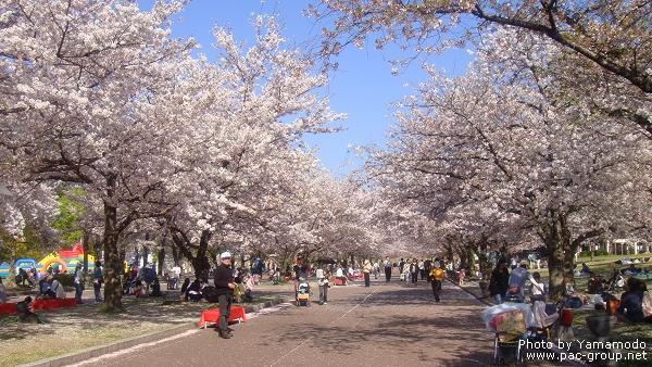 萬博記念公園 (10).jpg