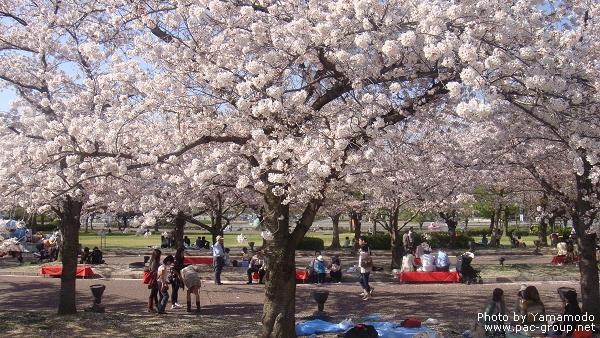 萬博記念公園 (11).jpg