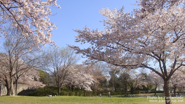 萬博記念公園 (13).jpg
