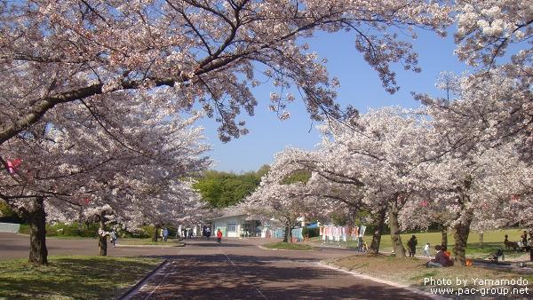 萬博記念公園 (18).jpg