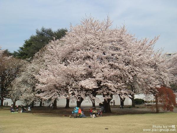 佐倉城址公園 (2).jpg