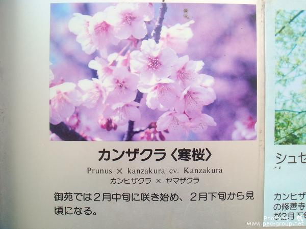 佐倉城址公園 (5).jpg