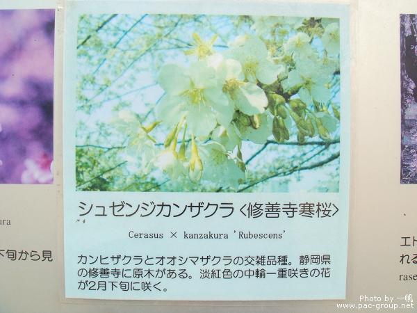 佐倉城址公園 (6).jpg