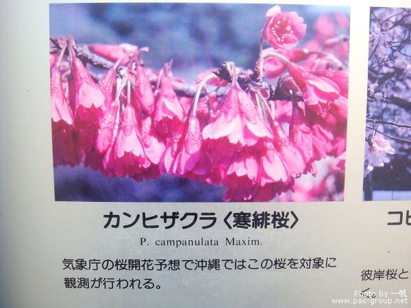 佐倉城址公園 (7).jpg