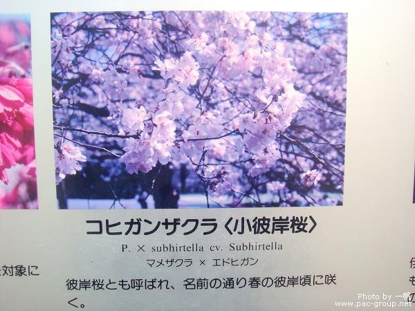 佐倉城址公園 (8).jpg