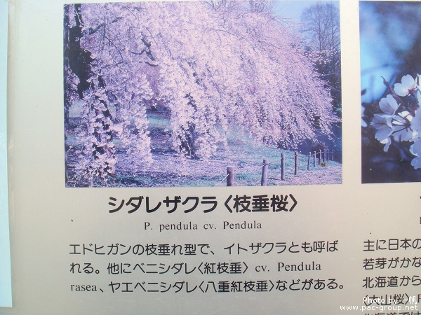 佐倉城址公園 (9).jpg
