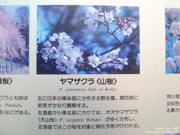佐倉城址公園 (10).jpg