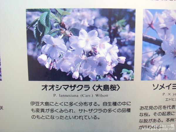 佐倉城址公園 (11).jpg