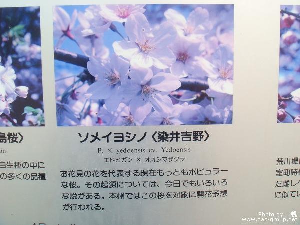 佐倉城址公園 (12).jpg