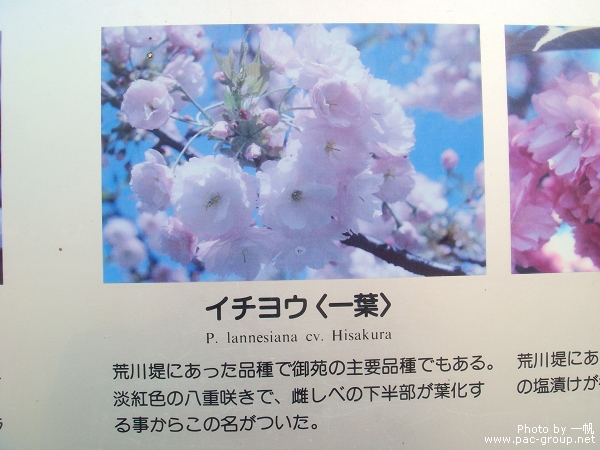 佐倉城址公園 (13).jpg