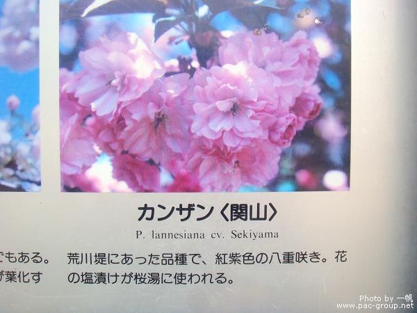 佐倉城址公園 (14).jpg