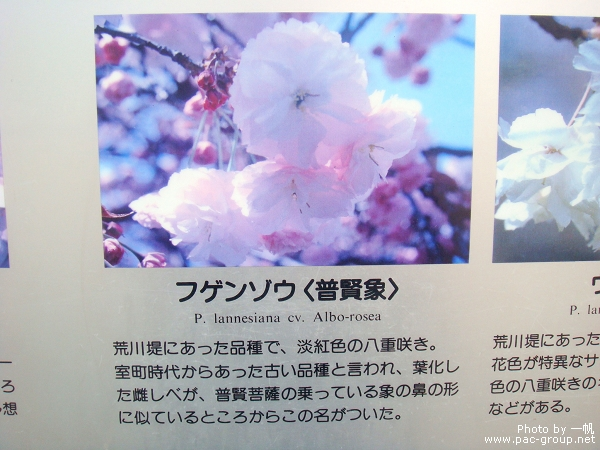 佐倉城址公園 (15).jpg