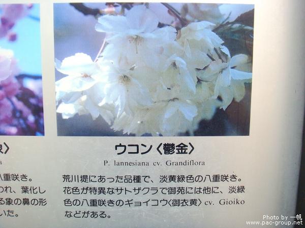佐倉城址公園 (16).jpg