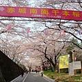 赤城千本櫻 (1).jpg