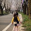 赤城千本櫻 (8).jpg