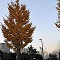 nEO_IMG_台場 (16).jpg