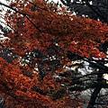 nEO_IMG_台場 (22).jpg