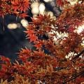 nEO_IMG_台場 (24).jpg