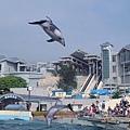 02沖繩海洋博公園海豚秀(使用圖檔請註明「沖繩海洋博公園提供」.jpg