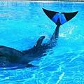 03沖繩海洋博公園海豚Fuji(使用圖檔請註明「沖繩海洋博公園提供.jpg