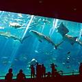 04美麗沖繩之海水族館(使用圖檔請註明「(財)沖繩觀光會議局提.jpg