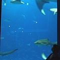 05美麗沖繩之海水族館(使用圖檔請註明「(財)沖繩觀光會議局提.jpg