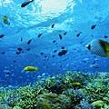14沖繩海底風光(使用圖檔請註明「(財)沖繩觀光會議局提供」).jpg
