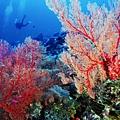 15沖繩海底風光(使用圖檔請註明「(財)沖繩觀光會議局提供」).jpg
