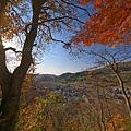 中野紅葉山.bmp