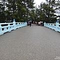 天橋立松原 (4).jpg