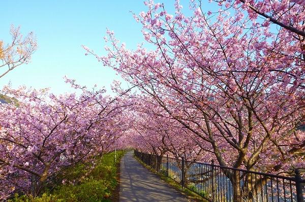 nEO_IMG_www.kawazuzakura.net__1266794844.jpg