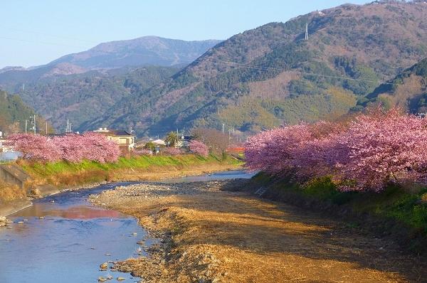 nEO_IMG_www.kawazuzakura.net__1266794890.jpg