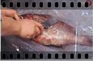 海鮮魚類的基本處裡法-crop2.jpg