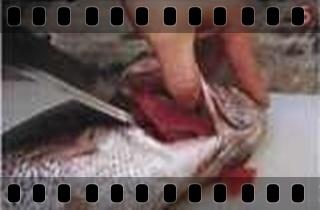 海鮮魚類的基本處裡法-crop5.jpg