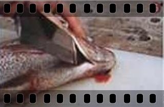 海鮮魚類的基本處裡法-crop6.jpg