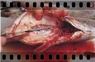 海鮮魚類的基本處裡法-crop9.jpg