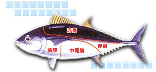 黑鮪魚部位說明