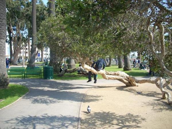 好像小時候爬樹只是離地未免也太近了