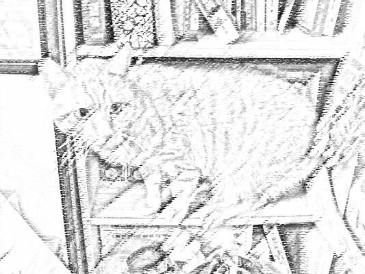 無辜貓.jpg