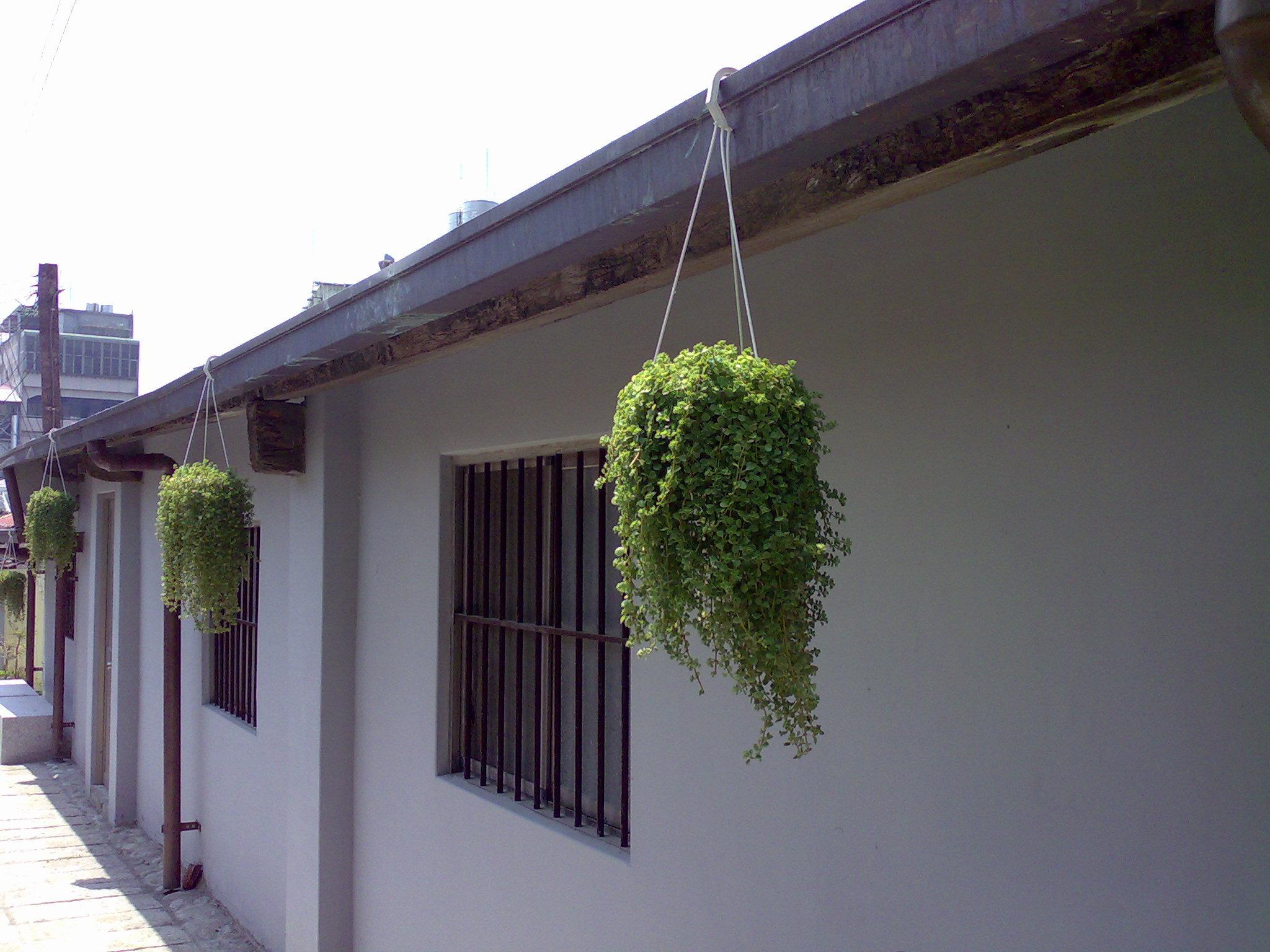 屋簷上的盆栽