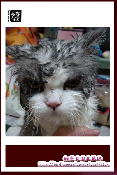 貓貓落湯雞.jpg