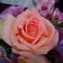 香檳玫瑰.JPG