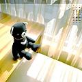 11月_1‧陽光中的小黑熊