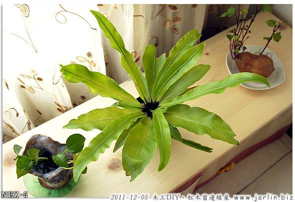 20111205松木窗邊矮桌06.jpg