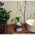 11_餐桌上的植物